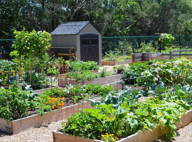 Hình ảnh minh họa về vườn rau xanh dùng chế phẩm sinh học